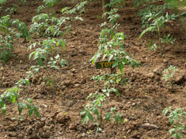 Ayurvedagram-herbal-grounds-300x225